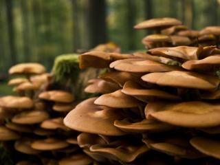обои Густо растущие грибы в лесу фото