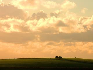 обои Трактор едет в поле фото