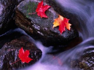 обои Осеннее настроение фото