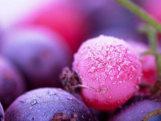 обои Первый заморозок на ягодах фото