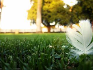 обои Перо в зеленой траве городского газона фото