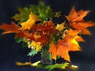 обои Натюрморт - Букет осенних листьев в вазе фото