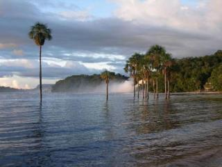 обои Пальмы в озере фото