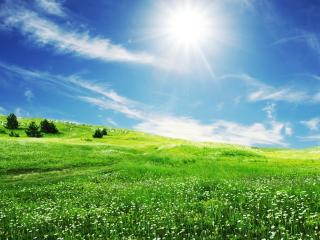 обои Зелёная лужайка на фоне солнца фото