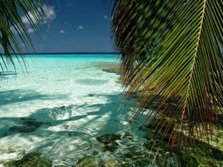 обои Необычайная прозрачность воды у берега фото