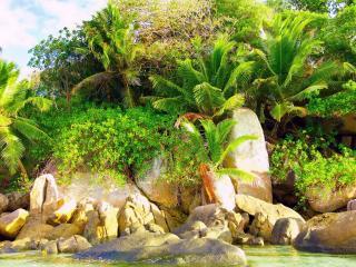 обои Растут пальмы у камней фото