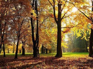 обои Oсень в парке фото