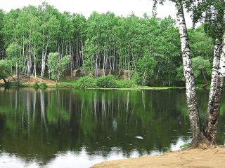 обои Березовая роща на берегу летнего пруда фото