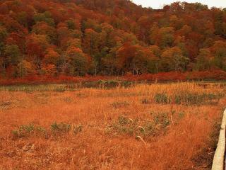 обои Вымощенная дорожка к осеннему лесу фото