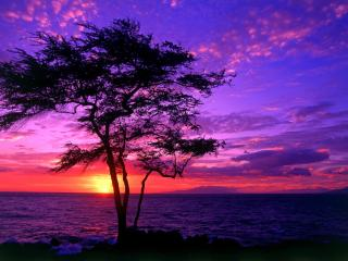 обои Пурпурный закат у моря и дерево у берега фото
