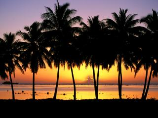 обои Ряд пальм у берега фото