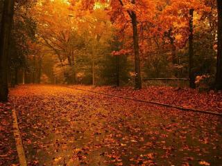 обои Опавшая листва на аллее в осеннюю пору фото