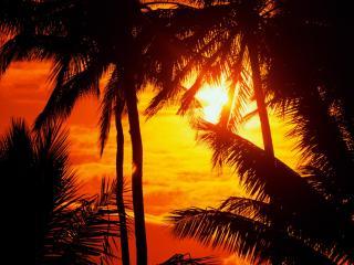 обои Пальмы нa закате фото