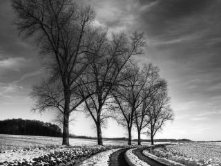 обои Плавный поворот дороги у поля зимой фото