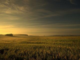 обои Небо над гречишным полем фото