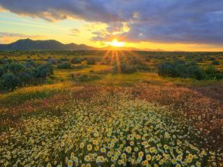 обои Восход над цветочными полями фото