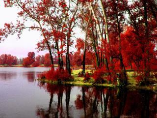 обои Красная осень на пруду фото