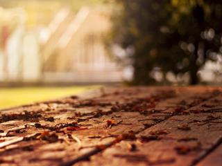 обои Сухие листья на деревянном полу фото