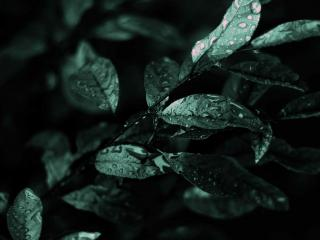 обои Зеленые мокрые листья фото