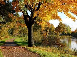 обои Дорожка возле пруда и деревья с желтеющей листвой фото