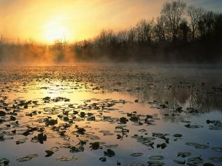 обои для рабочего стола: Восход на туманном озере