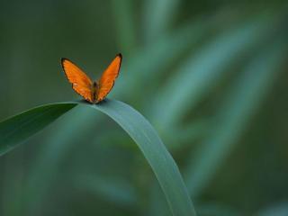 обои Маленькая оранжевая бабочка фото