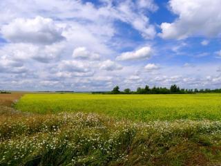 обои Облака над полями фото
