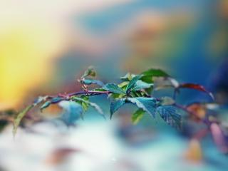обои Веточка с красивыми яркими листьями фото
