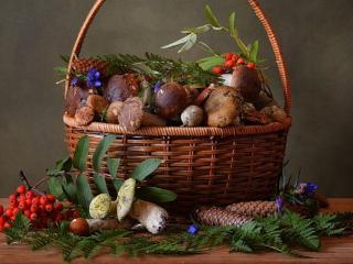 обои Шишки,   грибы и красная рябина фото
