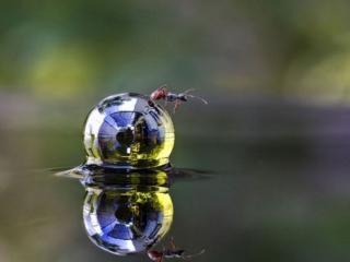 обои Капля и муровей фото