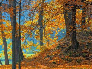 обои Осень и желтые опадающие листья фото
