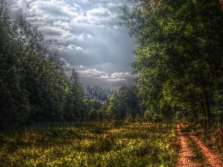 обои для рабочего стола: У густого леса дорога