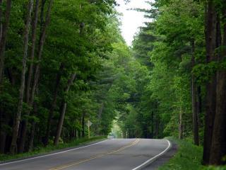 обои для рабочего стола: Главная дорога с разметкой через зеленый лес