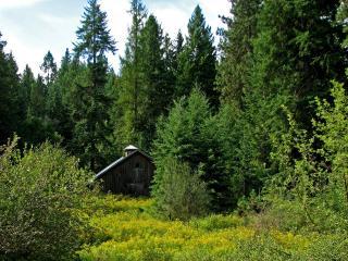 обои Деревяный дом в лесу фото