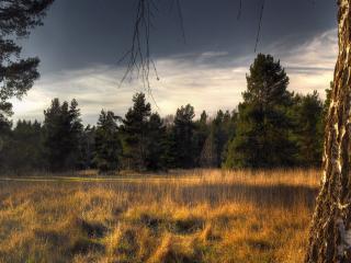 обои Трвы на лужайке лесной фото