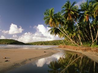 обои Пальмовое побережье реки фото