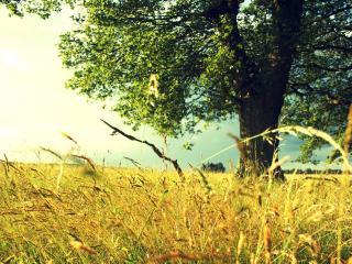 обои Высокая трава у летнего дерева фото