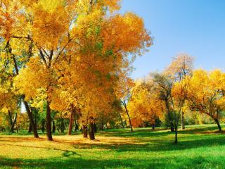 обои Жёлто-зелёная осень фото