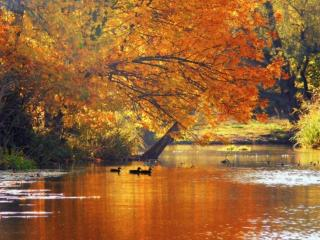 обои Осенний пруд и уточки фото