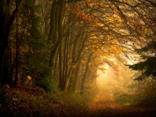 обои Бабье лето в лесу фото