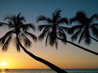 обои Три пальмы склонившиеся над морем фото