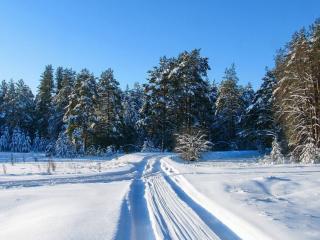 обои для рабочего стола: Лесные зимние дороги