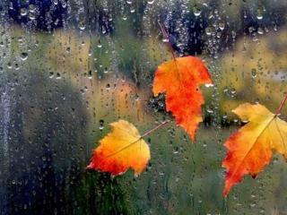 обои Под осенним дождём фото