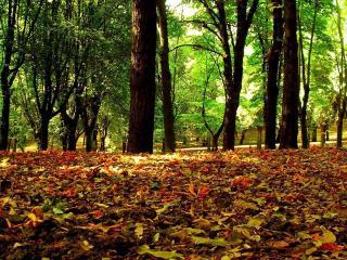 обои Oпавшая листва под деревьями фото