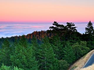 обои для рабочего стола: Леса и дорога выше облаков