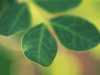 обои Яркие зеленый лепестки фото