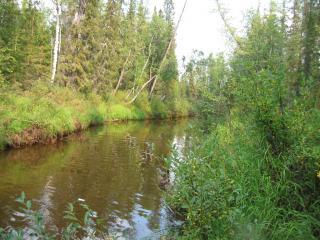 обои Зеленые кусты по краям речки фото