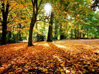 обои Свет осеннего солнца в лесу фото