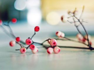 обои Веточка с ягодами фото