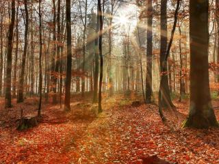 обои для рабочего стола: Земля усыпанная опавшей листвoй